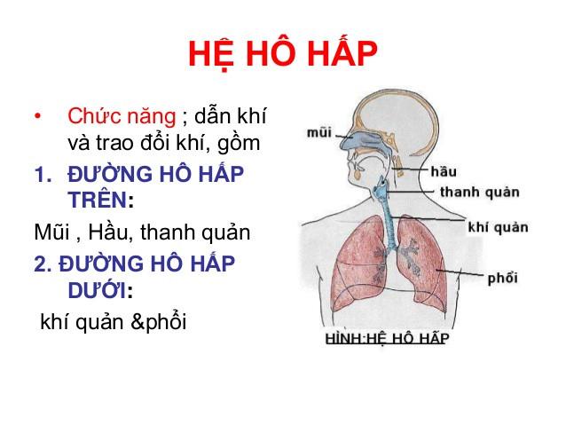 Viêm đường hô hấp trên mắc phải do đâu ? Cách trị và phòng bệnh ra sao ?
