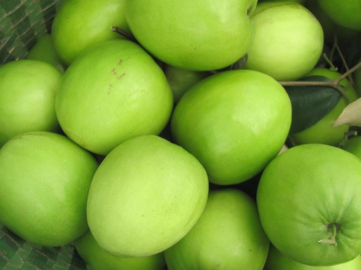 Một số sâu bệnh hại thường gặp trên táo Đài Loan và cách phòng trừ