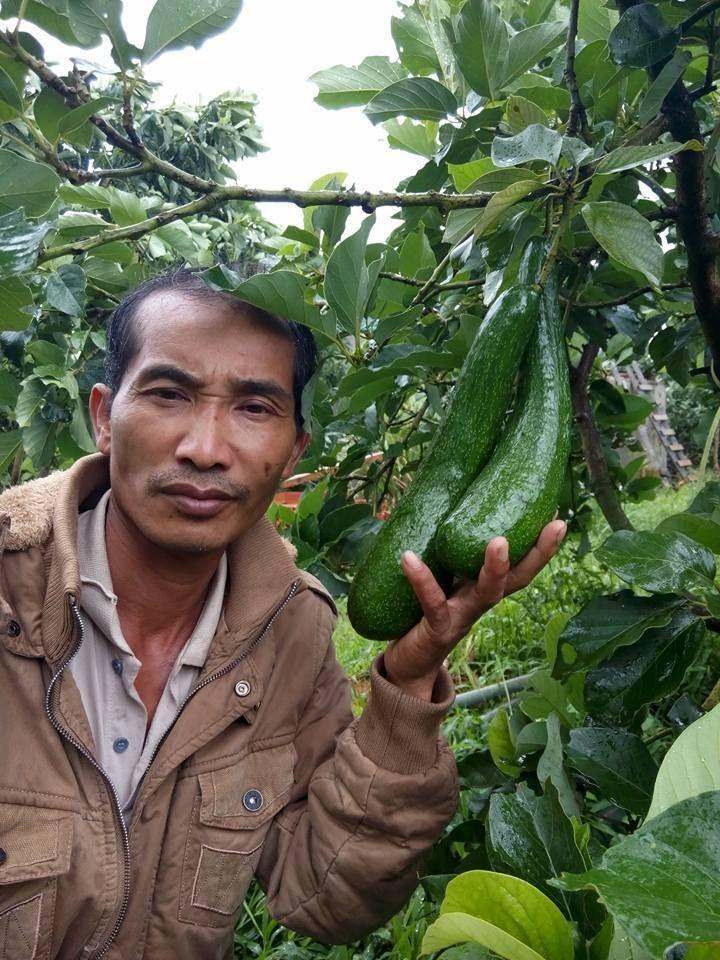Ông Nguyễn Văn Dậu và cây bơ đầu dòng 034