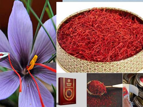 """Saffron có tác dụng tăng đề kháng giúp phòng đại dịch Corona hiệu quả Theo các báo cáo khoa học của Thư viện Y khoa Hoa Kỳ, nhụy hoa nghệ tây (Saffron) có tác dụng đối với việc cải thiện hệ miễn dịch, tăng đề kháng. Saffron cũng là """"vị thuốc"""" được áp dụng trong y học truyền thống của Iran, được người dân Iran sử dụng hàng ngày để giảm thiểu bệnh tật. Tuy nhiên để đạt được hiệu quả tăng đề kháng vượt trội nhất, người tiêu dùng nên chọn loại saffron đạt chứng chỉ ISO 3632.  Để sử dụng Saffron tăng cường miễn dịch, bạn có thể ngâm saffron với mật ong, và các dược liệu khác như nhân sâm, đông trùng hạ thảo, tam thất. Saffron tăng cường miễn dịch; mật ong kháng viêm, kháng khuẩn hiệu quả; đông trùng hạ thảo giúp bồi bổ sinh lực, cải thiện sức khỏe. Kết hợp cả ba nguyên liệu quý sẽ là kháng sinh tự nhiên cho sức khỏe phòng tránh bệnh tật, hạn chế khả năng lây nhiễm các bệnh về đường hô hấp."""