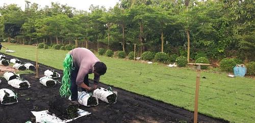Nhà Vườn Đức Tiến Phát Thi công trồng cỏ cho Khu dân cư Khang Điền Bình Chánh