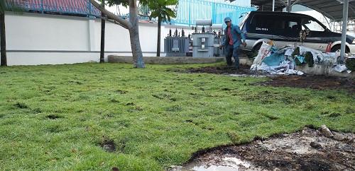 Nhà Vườn Đức Tiến Phát thi công sân vườn trồng cỏ nhung nhật cho Điện lực Thủ Đức TPHCM