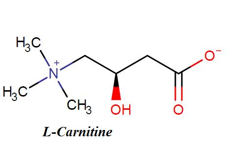 Chất L-Carnitin có giúp giảm cân không?