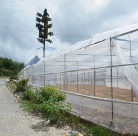 Nhà lưới trồng rau sạch(1)
