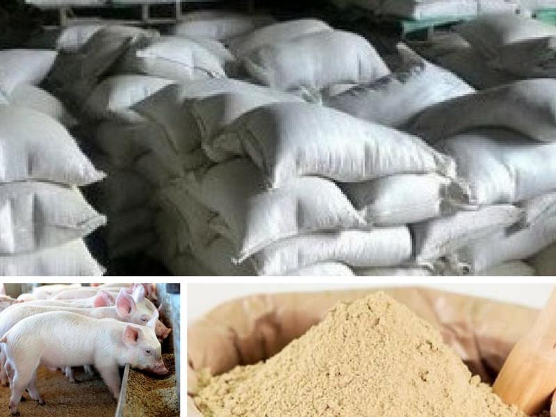 Tìm hiểu về cám gạo - Giải pháp dinh dưỡng trong chăn nuôi